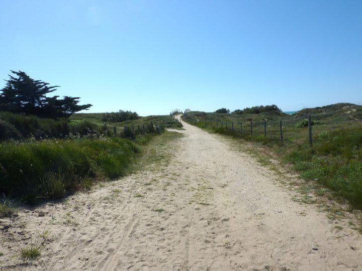 Chemin de la plage dans les dunes